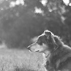 Morning Light by -gila-