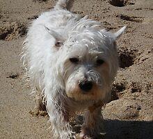 Grumpy Dog by Dawn Warren