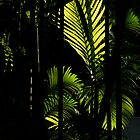 Sunshine Through Palms- Langkawi by Colin  Ewington