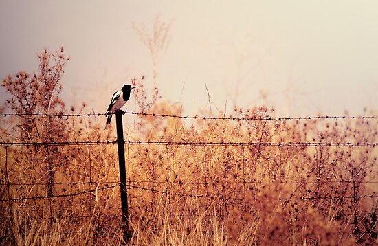 Bird on a Wire by yolanda