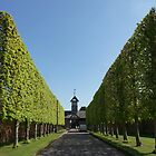 Pleached Lime Avenue by CiaoBella