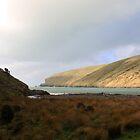 Flea Bay - Banks Peninsular, New Zealand by Ruth Durose