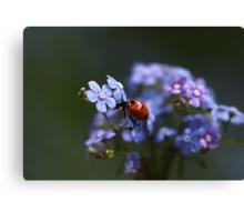 Ladybird... Canvas Print