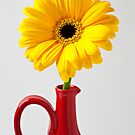Yellow Mum In Red Vase by Garry Gay