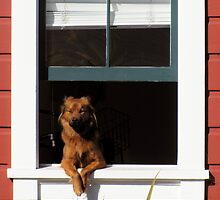 How much is that doggy in the window? by Angel Ray