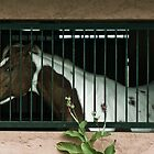 caballo-melancolía by Alex Ruzaykin