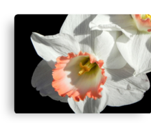Pretty Daffodil ©  Canvas Print