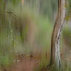 Hypnotic Path  © Vicki Ferrari Photography by Vicki Ferrari
