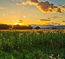 A Summer Dusk by John  De Bord Photography