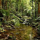 Rainforest by fnqphotography