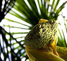 Palm Sprigs by Pippa Carvell