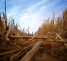 Post Harvest Barley Straw by Lukefidge