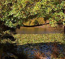 Autumn Surrounds by Lozzar Landscape