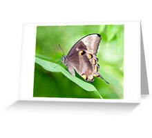 Wings - ulysses butterfly Greeting Card