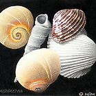 The coloured Shells by Michele Filoscia