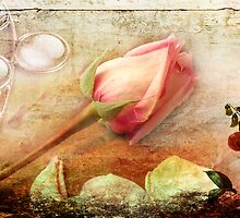 A Rose is a Rose by Rozalia Toth