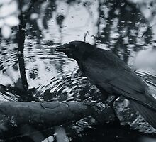 Crow mirroring in water by lautsu