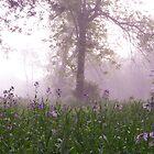 lavender morning by irishgirl7