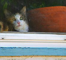 Kitten in the Window by Lenore Senior