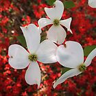 Dogwood Over Azalea by Jane Jenkins