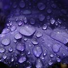 Raindrops on a purple iris by AndrewWright50