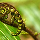 Koru - Fern on Ulva Island, New Zealand by Phil McComiskey