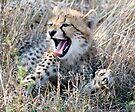 Yawn ! by Michael  Moss