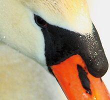 Swan Portrait by Melissa Ann Blair