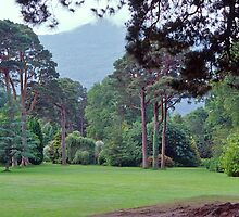 Tree Garden, Muckross House, Killarney, Ireland. by johnrf
