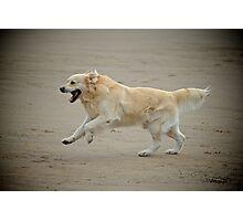 Golden retriever joyfully running alongs the sands Photographic Print