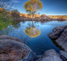 Photo Synthesis by Bob Larson