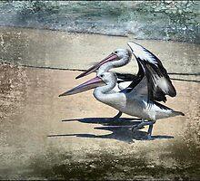 pelican crossing by carol brandt