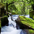 Golitha Falls Bodmin Moor by David Wilkins