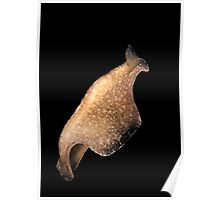 Swimming Flatworm Poster