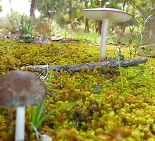 Shroom for More by Betty  Jewel