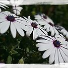 flowers by Chloé Ophelia Gorbulew