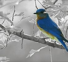 Just a Bluebird by Caren