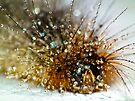 Hairy Caterpillar Macro II by kutayk
