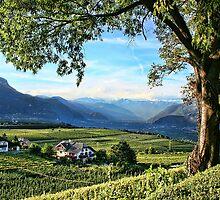 Italian Vineyards by Monica M. Winkler
