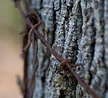 Trapping nature by DevinLeith