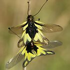 Owlflies by marens