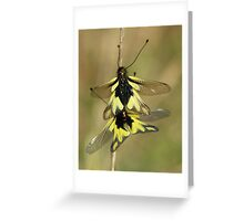 Owlflies Greeting Card