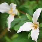 White Flower by Robert  Miner