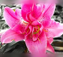 Oriental pink lily by Poete100