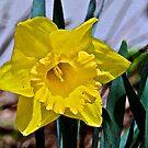 Spring by campbellart