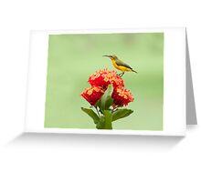 Another little sweety - sunbird in my Etty Bay garden. Greeting Card