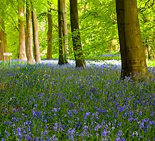Woodland Scene - Thorpe Perrow. by Trevor Kersley