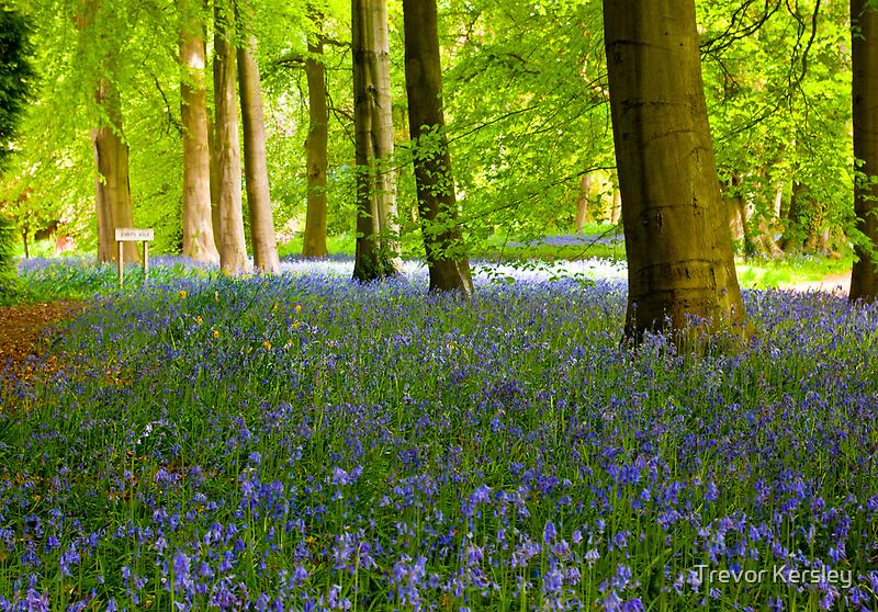 Woodland Scene - Thorpe Perrow. by Trevor Kersley