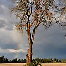 A distant rainbow by Jeannie Peters