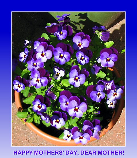 Mothers' Day Greeting Card with Purple Violas by BlueMoonRose